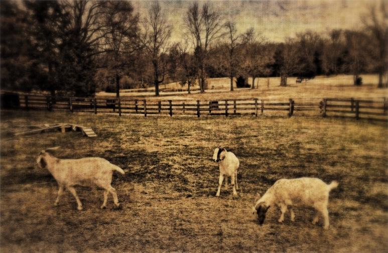 Pastoral #1